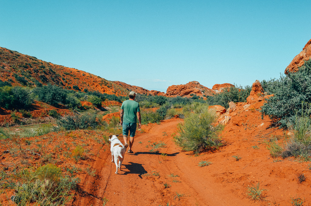 What do I need to travel with my dog?